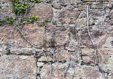 Old stone wall with roots Royalty Free Stock Photo