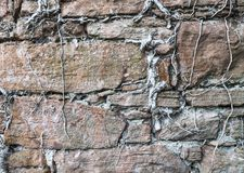 Old stone wall with roots. In Scotland Stock Photography