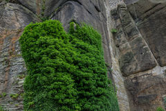 The old stone wall and stonework with green ivy Royalty Free Stock Image