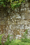 An Old Stone Wall Texture / Background Stock Image
