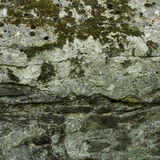 Old stone wall texture. Gray stone surface. Old stone backgroungd. Aged stone surface for design. Texture of gray granite stone wall. Stone Texture with Moss Stock Photography