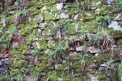 Old stone wall texture with green moss Royalty Free Stock Photography