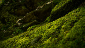 Old stone wall texture with moss on it. Old stone wall texture in Krasnodar Royalty Free Stock Photo