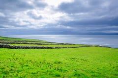 Ancient Stone Walls along the Irish Coast. Old stone walls run along the lush seaside cliffs on the Dingle Peninsula, Ireland Stock Photography