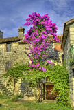Old stonehouse and tree in bloom. Vintage building with flowering tree royalty free stock photo