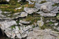 Old stones covered with moss, cobwebs, mushrooms.  Stock Photography