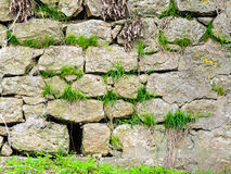 Old stones grass castle wall Stock Image