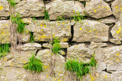 Old stones grass castle wall Stock Images