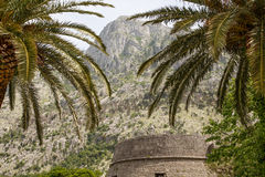Old Stones Past Palm Trees Royalty Free Stock Image