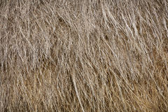 Old straw as a background Royalty Free Stock Photos