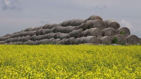 Old straw bales stack on yellow rapeseed field stock video footage