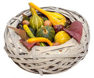 Old straw basket filled with baby pumpkins, isolated, white background Stock Photos