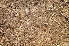 Old straw or hay lying on ground. Dried grass texture. Vintage Stock Image