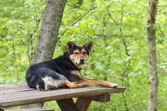 Old stray abandoned dog in the woods Royalty Free Stock Photos