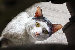 Old stray cat black and white look straight Stock Photo
