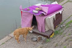 Stray Dog House Stock Photography