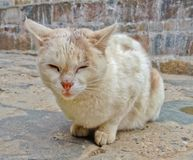Old Stray white brown color cat feels drowsy on the cold street. Pet love and care, abandoned cat helping hand concept.  stock photography