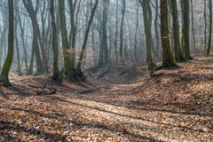 Old stream trough in forest in late february winter with fog, sun beams and long tree shadows Stock Photography