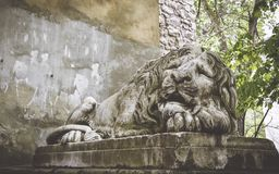 Old street architecture of the city Lviv. A stone statue of a sleeping lion in the old Park. Old street architecture of the city of Lviv, Ukraine. Street Gothic royalty free stock photo