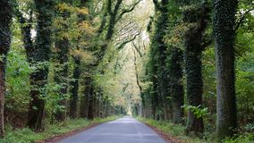 Old street - avenue - old trees Royalty Free Stock Images