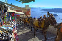 Donkeys on Santorini old street,Greece. Spectacular view  from Santorini-narrow cobbled street,traditional for centuries vehicle-animal traction on the steep Royalty Free Stock Image