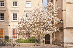 Free Old Street In Oxford, England, UK Stock Image - 44375181