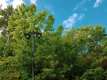 Old street lamp in the park among the green treetops and bushes. stock photography