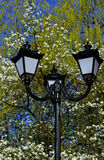 Old street lamppost against blossom magnolia tree and blue sky background Royalty Free Stock Photos