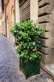 Old streets of Rome, Italy Royalty Free Stock Image