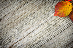 Old striped wooden background. And autumn leaves Royalty Free Stock Image