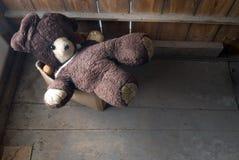 Old stuffed bear Stock Photos