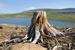 Old stump Stock Photography