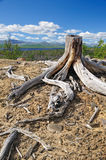 Old stump Stock Photo