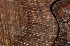 Old stump Stock Image