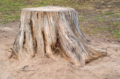 Old stump Royalty Free Stock Images