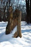Old stump broken tree Stock Images