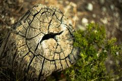 The old stump stock photography