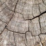 Old Stump Crack Texture Stock Photo