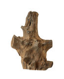 Old stump for decoration Royalty Free Stock Photography