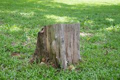 An old stump on grass. Field Stock Image