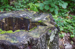 Old stump. With a hole in the middle Stock Images