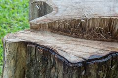 Old stump with many burs. An old stump with many bur on surface. the burs happen in cutting, sawing process Royalty Free Stock Image