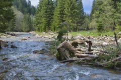 Old stump and mountain river Royalty Free Stock Images