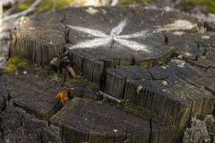Old stump with a picture of star or flower. Royalty Free Stock Photos