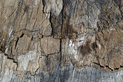 Old stump texture Royalty Free Stock Photo