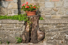 Old stump to support flower pots Stock Images
