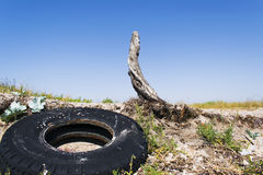 Old stump with a wheel from the car. In the wilderness Royalty Free Stock Photo