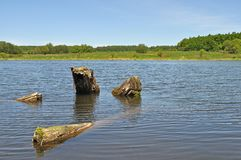 Old stumps in lake Stock Image