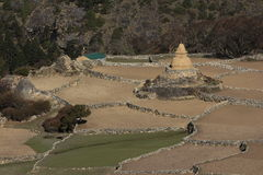 Old stupa and fields in Phortse Stock Image