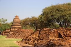 Old Stupa With Jujube Tree And Green Grass. Ruins. temple with old pagodas and bricks base Buddhist historical park in Phrm Ram temple. summertime in Ayutthaya stock photos
